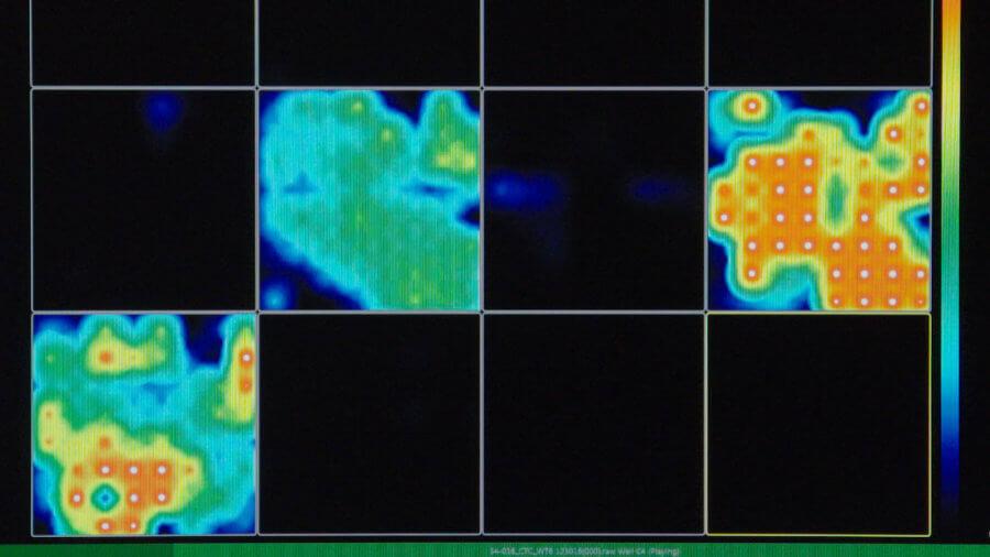 neuroscience brain organoid activity map by multi-electrode arrays